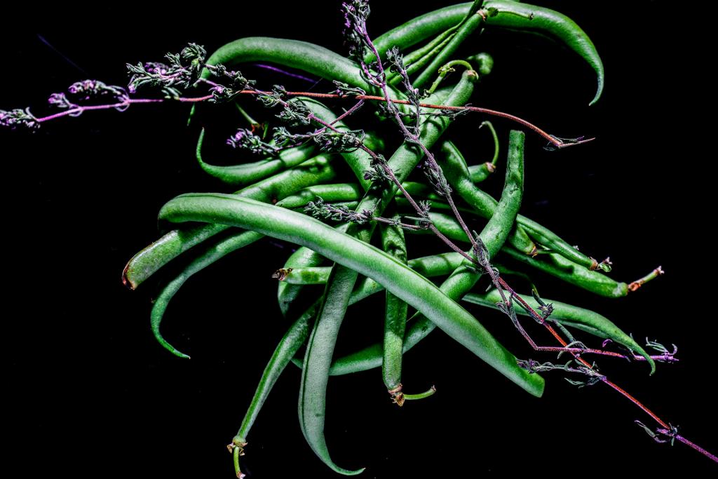 Grüne Bohnen und Bohnenkraut