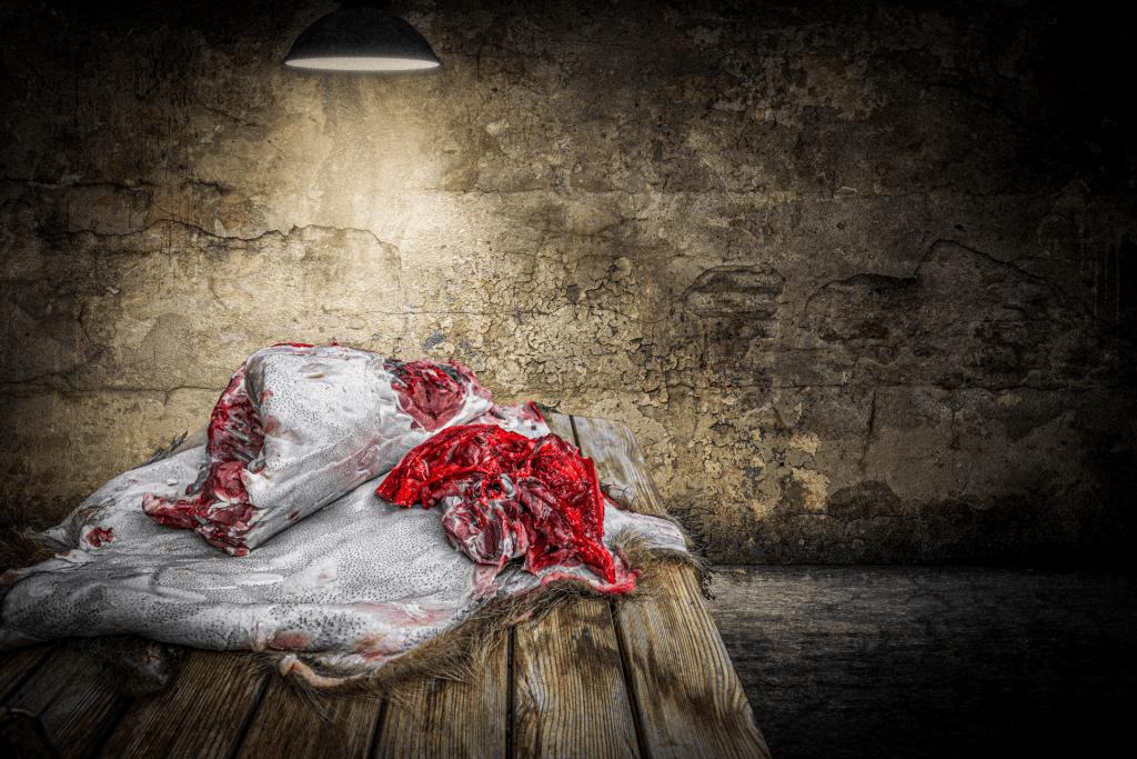 Zerlegtes Wildschwein mit Adobe Stock